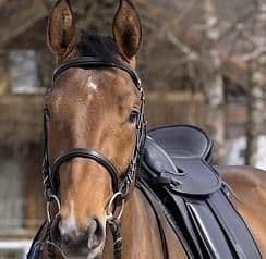 Barefoot Bridles