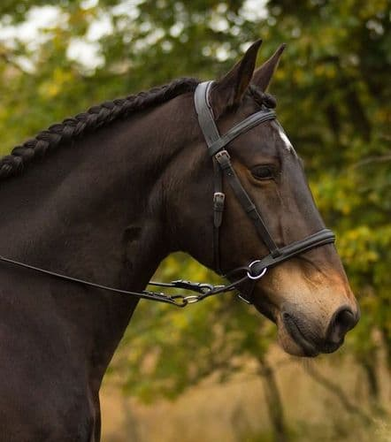 Bitless Bridle 'Walnut'