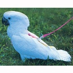 Feather Tether Harness - Small & Medium in stock