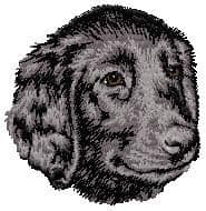 Flat-Coated Retriever 2
