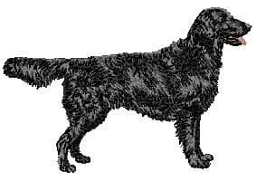 Flat-Coated Retriever 3