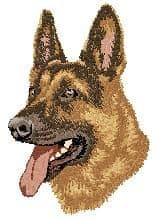 German Shepherd 11