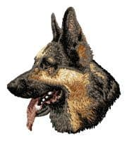 German Shepherd 16