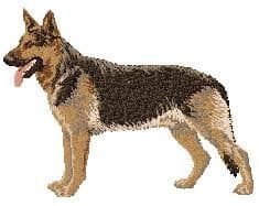 German Shepherd 5