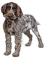 Pointing Griffon Wire-haired