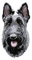 Scottish Terrier 4
