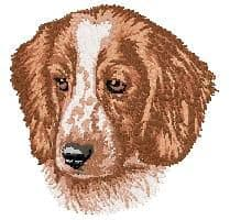 Welsh Springer Spaniel 2